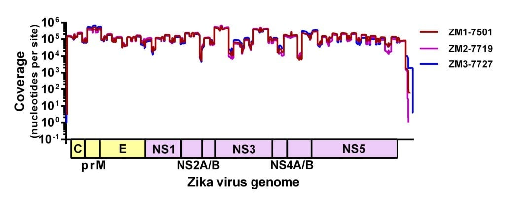 Figure 1. Sequencing coverage of Zika virus from pools of Ae. aegypti using our amplicon-based approach for MiSeq.